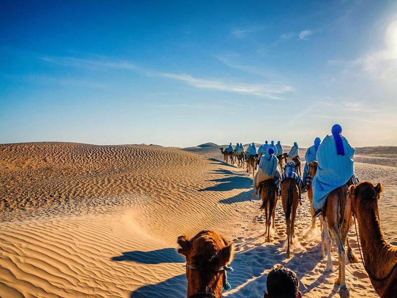 Караван верблюдов идет по Сахаре, Тунис
