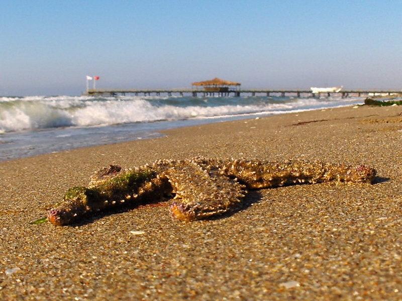 Кумбургаз пляж